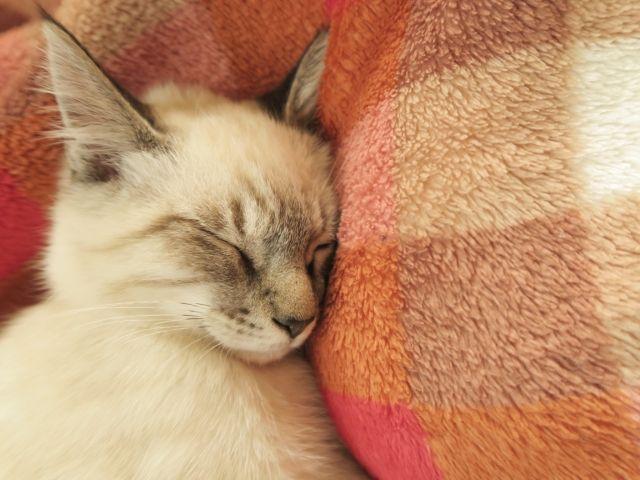 睡眠 ぐっすり
